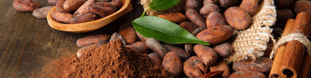 Africa Sourcing Cocoa Exporter